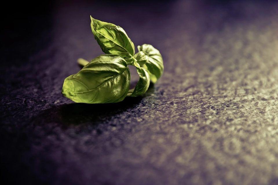 Zucchini alla Puttanesca – Zoodle Recipe